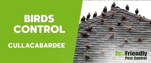 Birds Control Cullacabardee