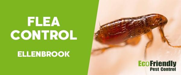 Fleas Control Ellenbrook