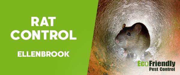 Rat Pest Control Ellenbrook