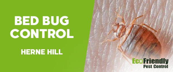 Bed Bug Control Herne Hill