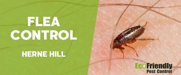 Fleas Control Herne Hill