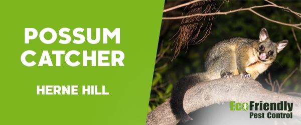 Possum Catcher Herne Hill