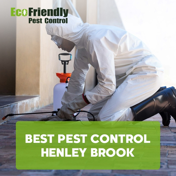 Best Pest Control Henley Brook