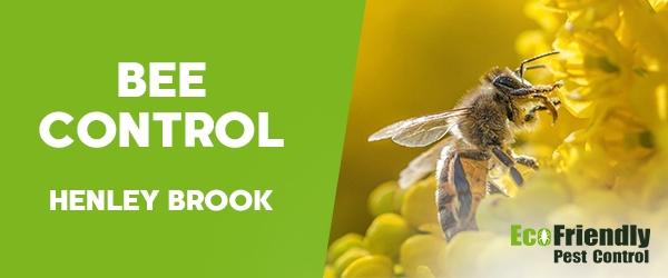 Bee Control Henley Brook