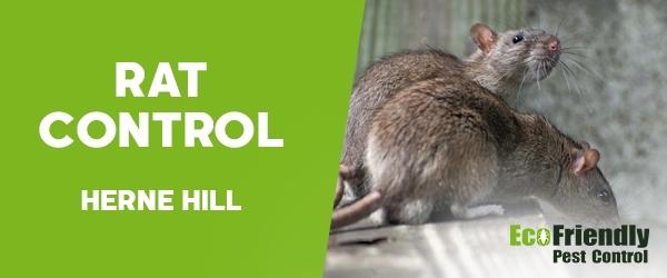 Rat Pest Control Herne Hill