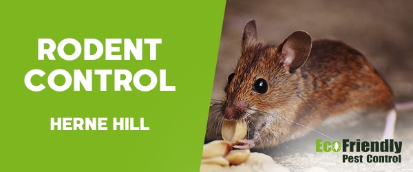 Rodent Treatment Herne Hill