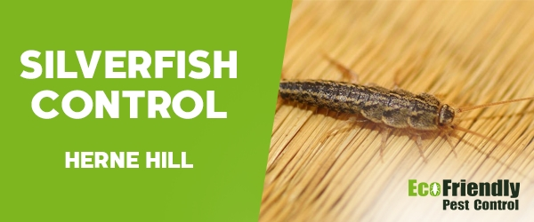 Silverfish Control Herne Hill