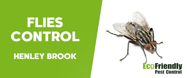 Flies Control Henley Brook