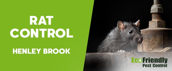 Rat Pest Control Henley Brook