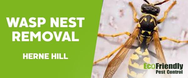 Wasp Nest Remvoal Herne Hill
