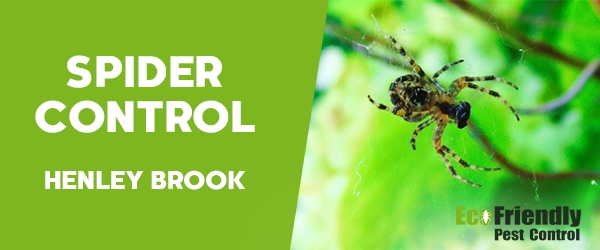 Spider Control Henley Brook