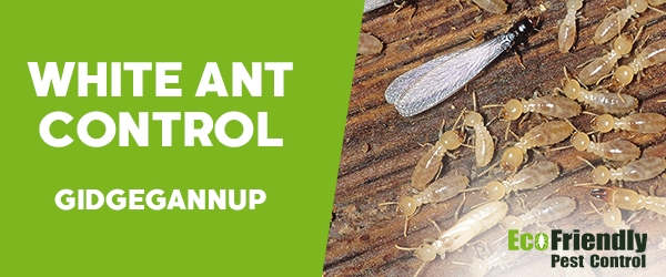 White Ant Control  Gidgegannup