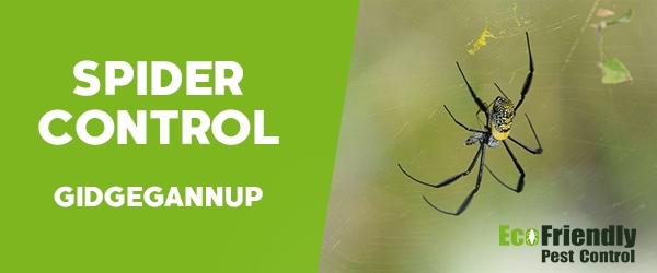 Spider Control  Gidgegannup
