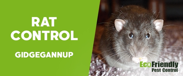 Rat Pest Control  Gidgegannup
