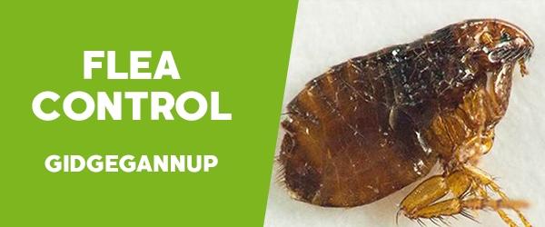 Fleas Control  Gidgegannup