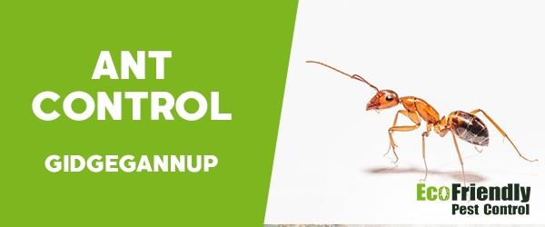 Ant Control  Gidgegannup
