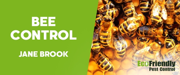 Bee Control Jane Brook