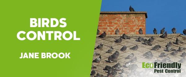 Birds Control Jane Brook