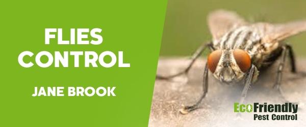 Flies Control Jane Brook