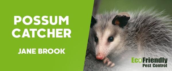 Possum Catcher Jane Brook