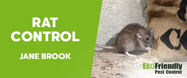 Rat Pest Control Jane Brook