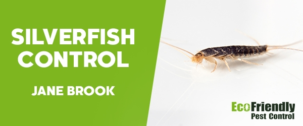 Silverfish Control Jane Brook