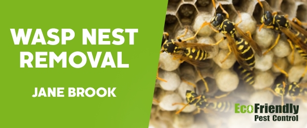 Wasp Nest Remvoal Jane Brook