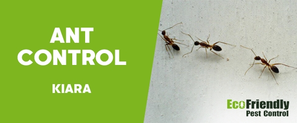 Ant Control  Kiara