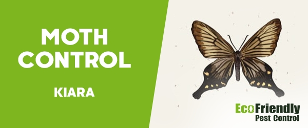 Moth Control  Kiara