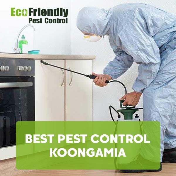 Best Pest Control Koongamia
