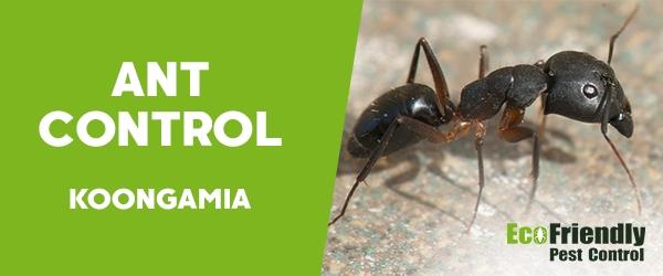Ant Control Koongamia