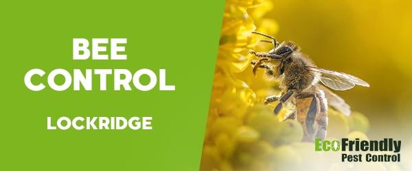 Bee Control Lockridge