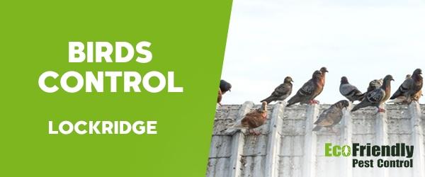 Birds Control Lockridge