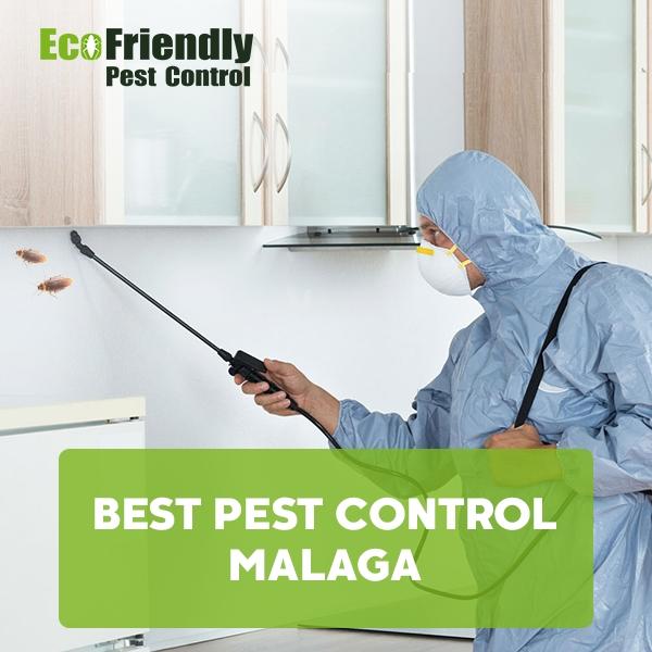 Best Pest Control Malaga