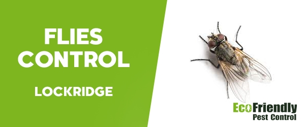Flies Control Lockridge