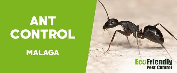 Ant Control Malaga