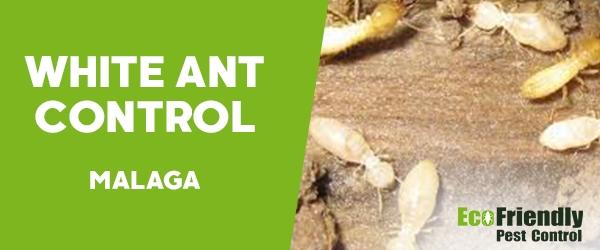 Pest Control Malaga