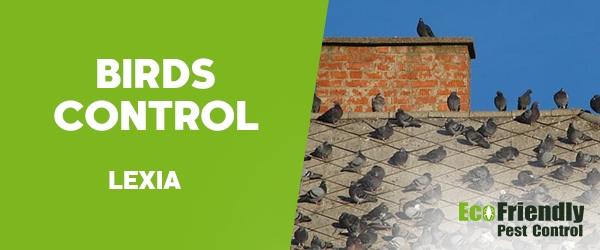 Birds Control Lexia
