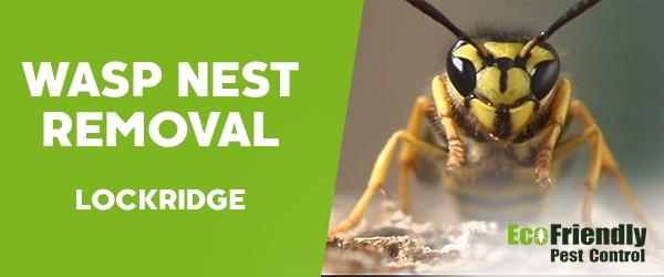 Wasp Nest Remvoal Lockridge