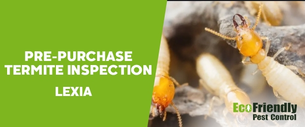 Pre-purchase Termite Inspection Lexia