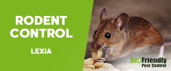 Rodent Treatment Lexia