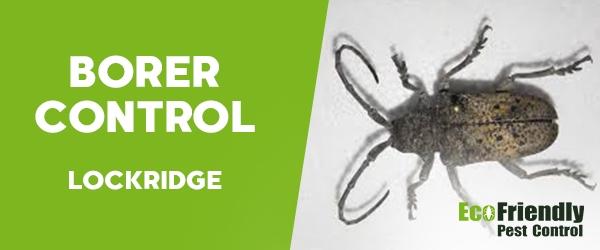 Borer Control Lockridge