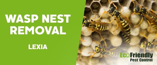 Wasp Nest Remvoal Lexia