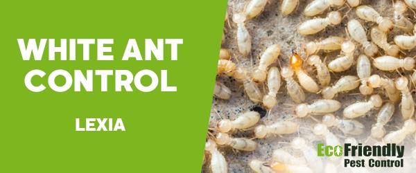 White Ant Control Lexia