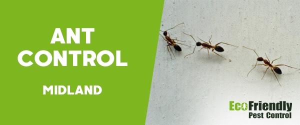 Ant Control Midland