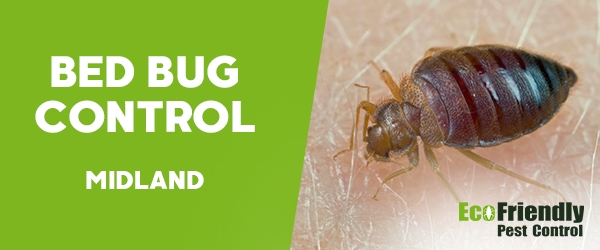 Bed Bug Control Midland
