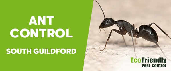 Ant Control South Guildford