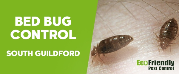 Bed Bug Control South Guildford