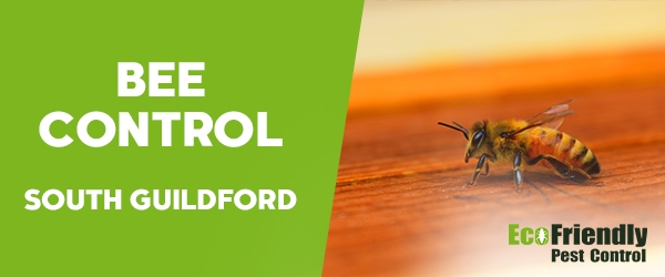 Bee Control South Guildford