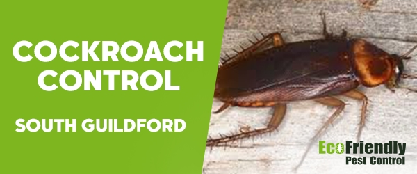 Cockroach Control South Guildford